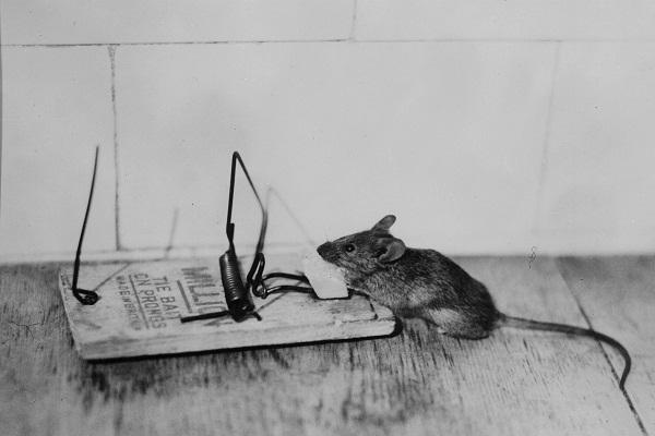 ネズミ捕り